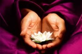 monk_holding_lotus24754_462x306